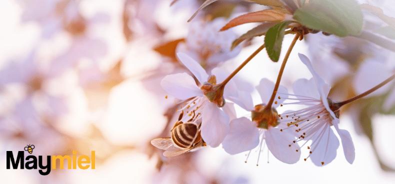 comment-abeilles-fabriquent-miel