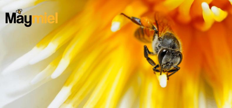 comment-nourrir-abeilles