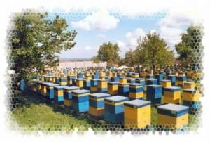 Apprenti apiculteur