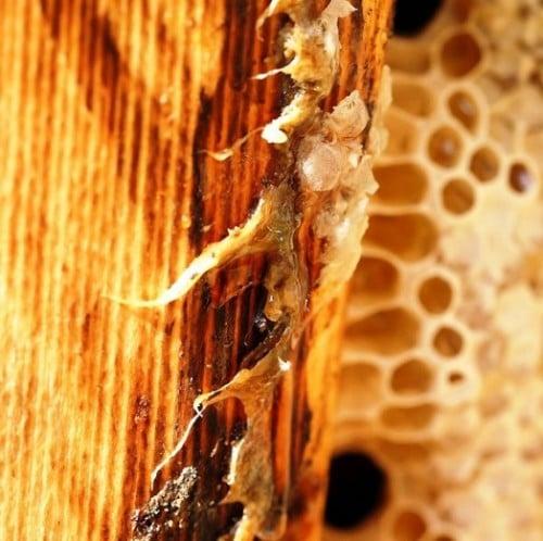 Avantages de la propolis