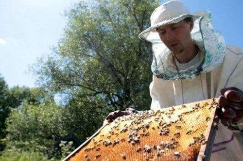 Comment collecter le miel - apiculture pour les nuls