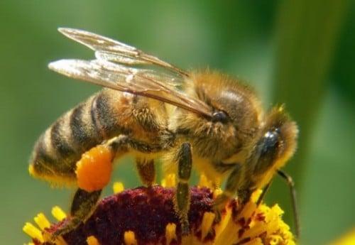 Faits abeilles cool