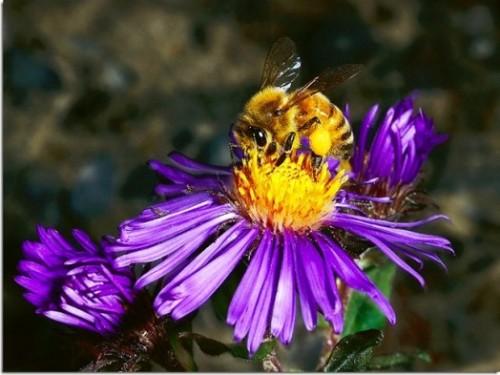 Faits abeilles