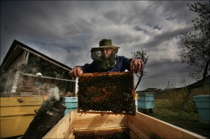 Beekeeper honey - keeping bee hives (3)