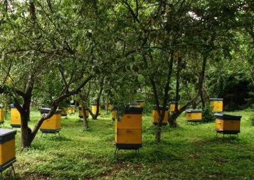 Les fermes apicoles