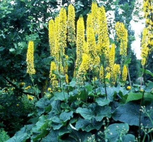 Les meilleures plantes pour les abeilles