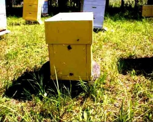 Noyau d'abeille