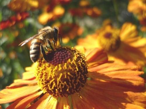 Bee habitat - how does bee work (1)